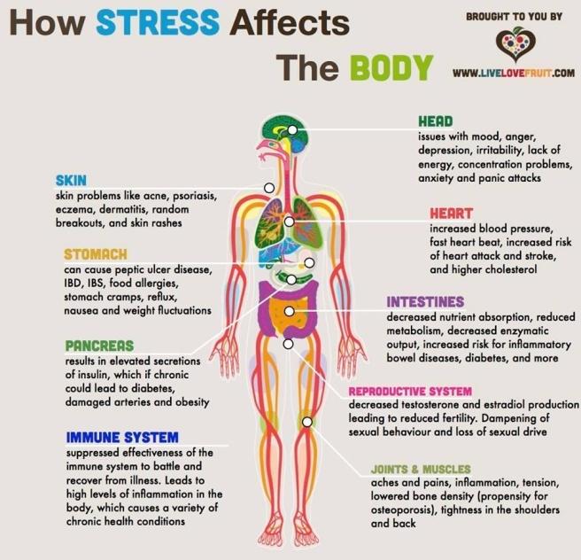 body stress.jpg